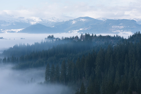 Mountain landscape in winter. Fir forest and fog. Cloudy day. Carpathian Ukraine, Europe
