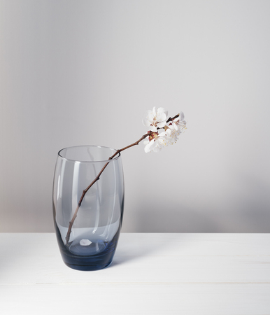 Branch of apricot tree with flowers in a glass. Simple spring still life on a white background
