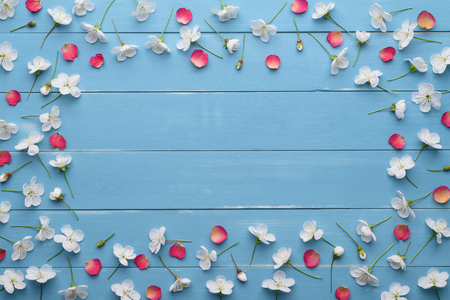 blue petals: Frame of white flowers of cherry tree and red rose petals. Floral decoration on a blue wooden background. Template for design. Flat layout, top view
