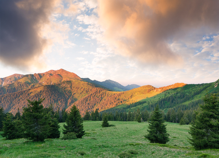 art processing: Summer landscape with spruce forest. Beautiful sunrise in the mountains. Carpathians, Ukraine, Europe. Art processing of photos. Color toning Stock Photo