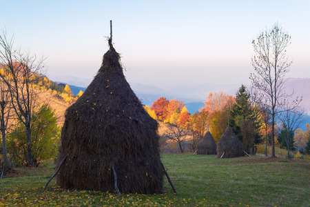 Rural landscape in autumn. Making hay for the winter. Haystacks on a mountain meadow. Sunny morning in the village. Carpathians, Ukraine, Europe