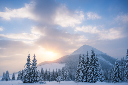 Winter landscape with spruce forest in the mountains. Sunrise with beautiful clouds. The top and the field. Carpathians, Ukraine, Europe Stock Photo