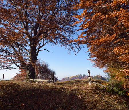 Autumn landscape in countryside. Wooden fence and gates. Road in beech forest Фото со стока