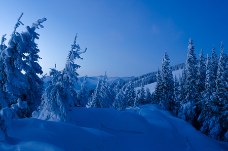 hoarfrost: Winter in the mountains. Evening landscape in blue tones