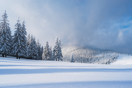 Christmas landscape with fir tree in the snow. Beautiful clouds and mountain peak. Carpathians, Ukraine, Europe Banque d'images