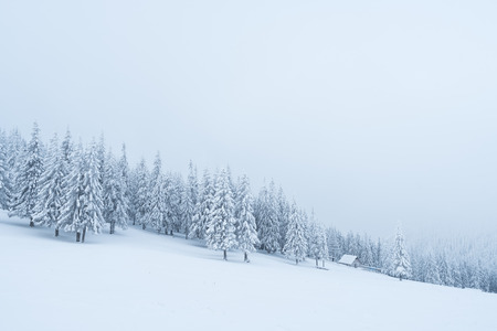 Snowfall in the mountains. Winter landscape with fir forest and fog