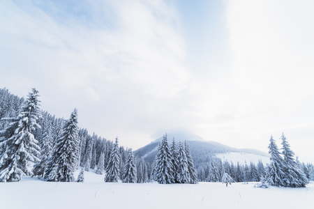 Christmas landscape with fir tree in the snow. Carpathians, Ukraine, Europe Banque d'images
