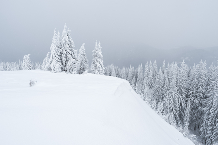 Winter landscape with fir forest covered with snow. Overcast day Banque d'images