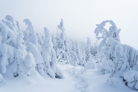 Snowy winter in a mountain forest. Cloudy day Banque d'images