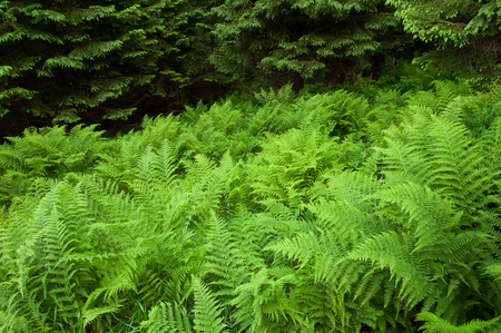Green fern in the forest Stock Photo