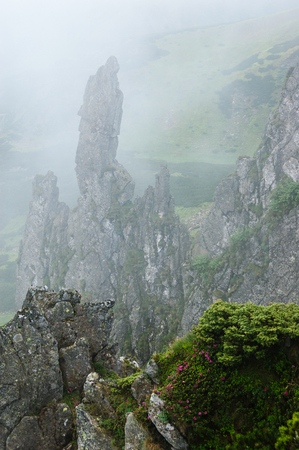 Fog in the mountains. Rhododendron on the rocks. Severe landscape