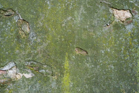 Texture of the wall with old plaster of green color