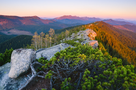 Morning landscape with morning light of the sun. Bushes mountain pine on the ridge. Carpathians, Ukraine, Europe