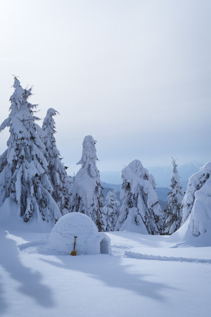 Winter scene with a Eskimo igloo. Amazing view with snowdrifts and fir trees in the snow
