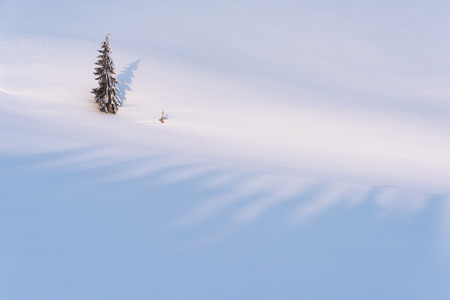 Lonely fir tree in the winter mountains. Snowy background with copy space for text 版權商用圖片