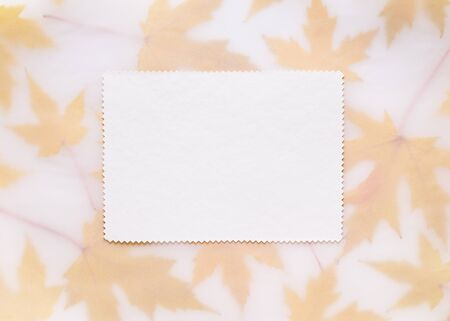 Autumn card with maple leaves. Background with frame of fall foliage. White sheet of paper for message, congratulations or promotional text