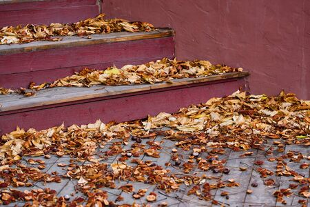 Fallen autumn foliage and chestnuts on a city street. Abstract autumn background with steps and leaves Stok Fotoğraf