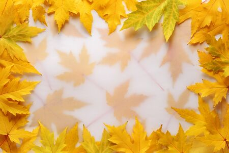 Autumn background with a frame of yellow maple leaves and copy space for text Stok Fotoğraf