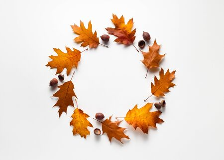 Autumn background with a round decorative frame of oak leaves and acorns. Copy space on white Standard-Bild