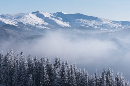 View of the snowy ridge. Winter landscape with spruce forest in the snow and mountains. Sunny day with fog