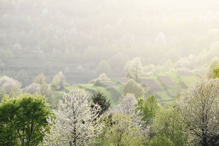 Spring background with blooming trees on the slopes of the village hills