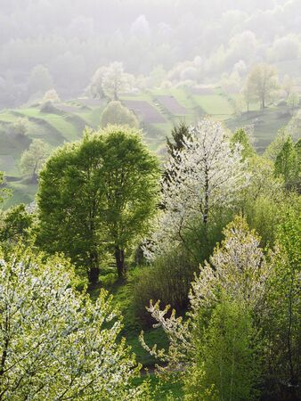 Flowering trees in rural gardens. Spring nature Archivio Fotografico