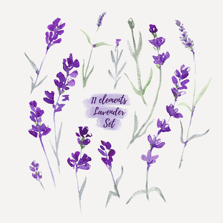 Set Lavender flowers elements. Botanical illustrations are drawn by hand Stock Photo