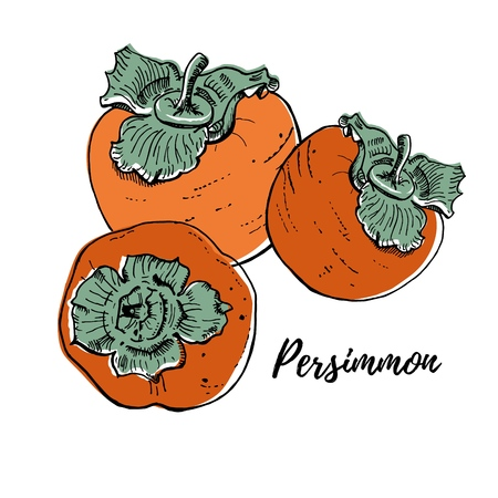 Ripe fresh persimmons vector illustration isolated on white. Three orange bright fruits. Realistic, delicious drawing. Hand drawn