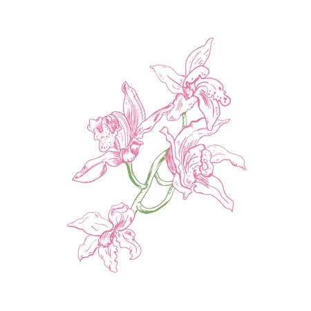 Elegant vector wild orchid branch drawing. For tattoo design, wedding invitations and packaging. Engraving like, on white background