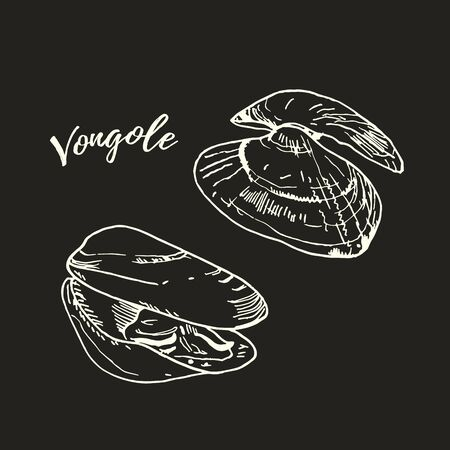 Fresh raw venus clam white chalk illustration isolated on blackboard. Chalkboard line art vector. Hand drawn Italian cuisine ingridient called vongole.