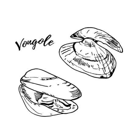 Fresh raw venus clam engraving illustration isolated on white. Black ink, line art vector. Hand drawn Italian cuisine ingridient called vongole. 일러스트