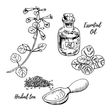 Dried medicinal herb pile with a wooden spoon and a bottle of essential oil. Vector sketch illustration in colored lines isolated on white