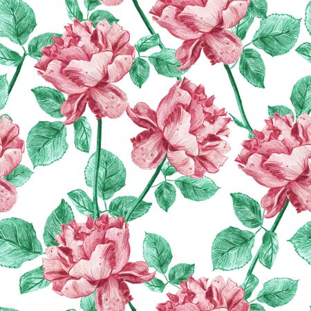 Vintage floral seamless pattern with hand drawn garden roses. Elegant pastel rose and green design with leaves and flowers on white background