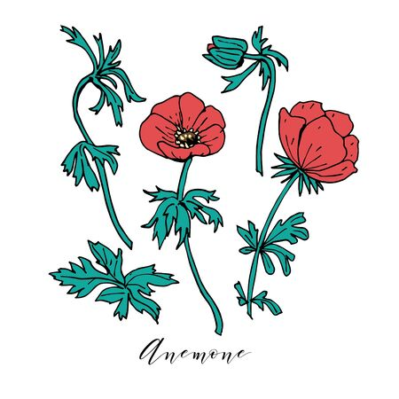 Hand drawn anemone ink and color vector illustration. Wild red flowers set isolated on white