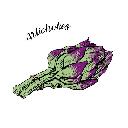 Purple green roman artichokes hand drawn vector illustration isolated on white. Fresh vegetable objects. Detailed vegetarian food drawing. Farm market product for menu, label, icon