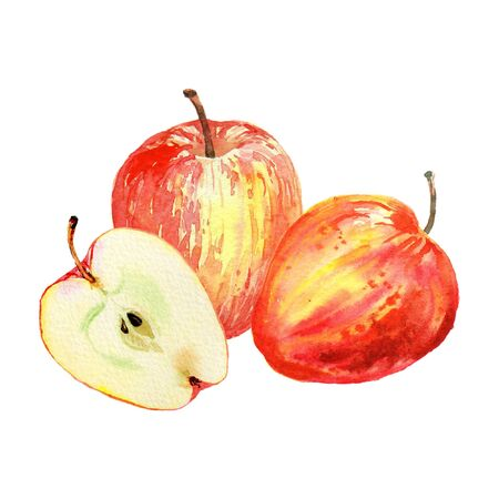 Red apples isolated on white background. Watercolor illustration of cut and whole red apples. Harvest collection. Fruit set.