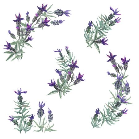 Watercolor vintage set of lavender flowers elements. Botanical illustration. Collection of lavender flowers on a white background. Lavender flowers and leaves isolated on white background.