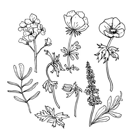 Hand drawn ink field flowers spring summer set isolated on white background. Anemone, phlox, leaves, twigs