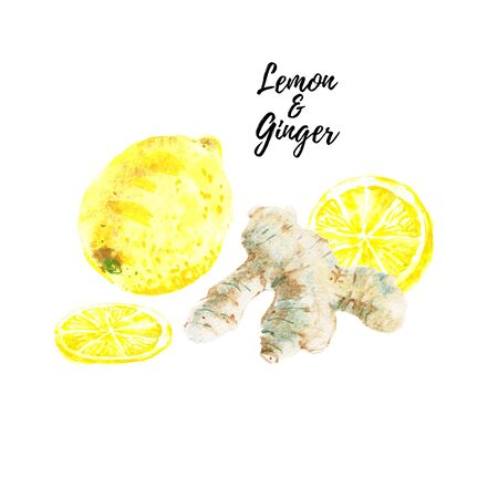 Watercolor yellow lemon, ginger root isolated on white background. Slice and half cut citrus fruit. Hand drawn illustration isolated on white background