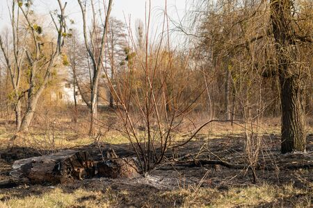 Area damage of fire among forest. Part of dry and black tree. Damage to the environment and nature