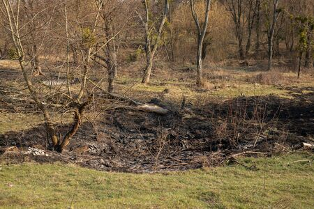 Burned field among forest. Black grass and branches after fire