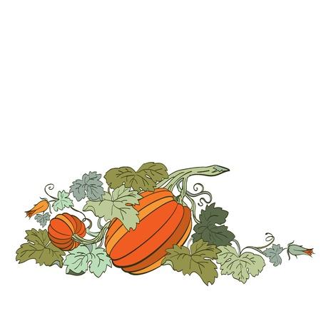 Pumpkin Background Stock Vector - 14675993