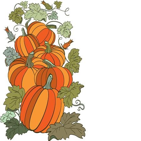 Pumpkin Background Stock Vector - 14676000