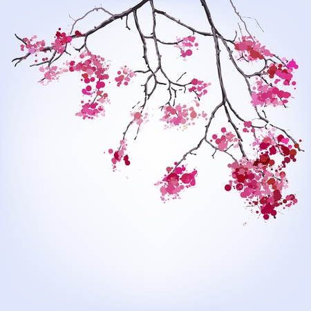sakura flowers: Spring Blooming Sakura branch of blots background