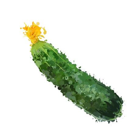 raw potato: cucumber vegetable illustration of blots Illustration