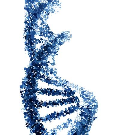 Hélice de ADN aislado en fondo blanco