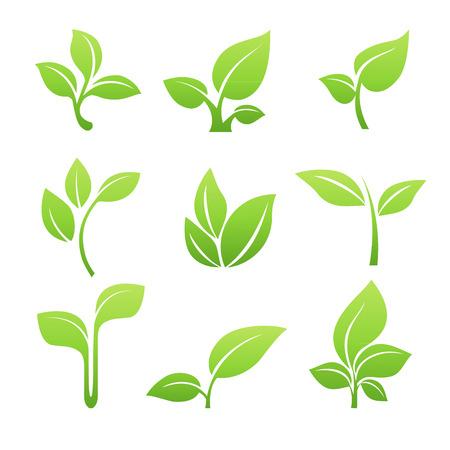 feuilles d arbres: Pousse verte symbole icône ensemble