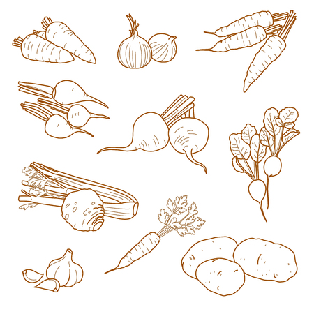 Root vegetables, vegetarian farm products set, vector, hand-drawn