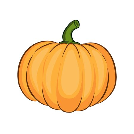 Orange pumpkin vector illustration. icon or print, isolated