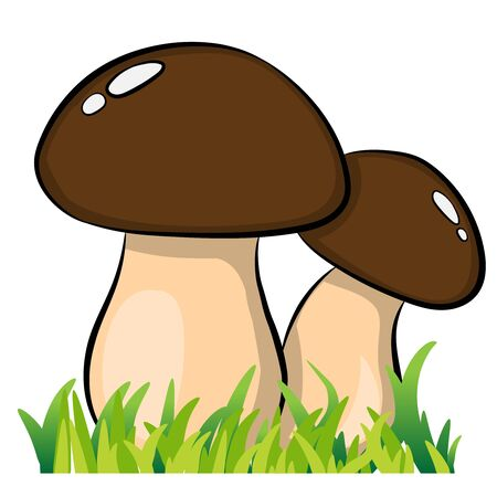 two cartoon mushrooms on white background vector